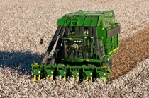 Follow the link to the Cotton Harvesting page