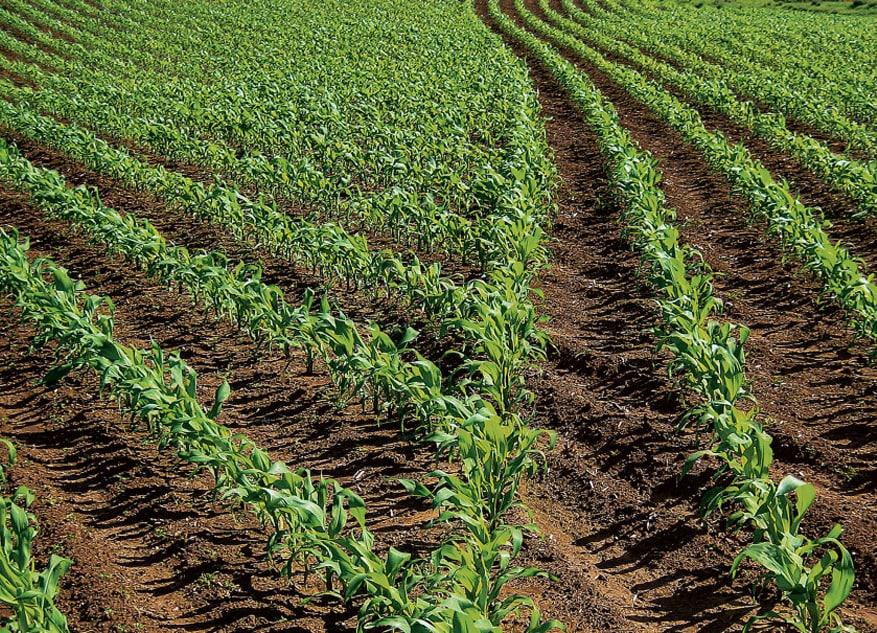 Soluciones de Siembra y cosecha