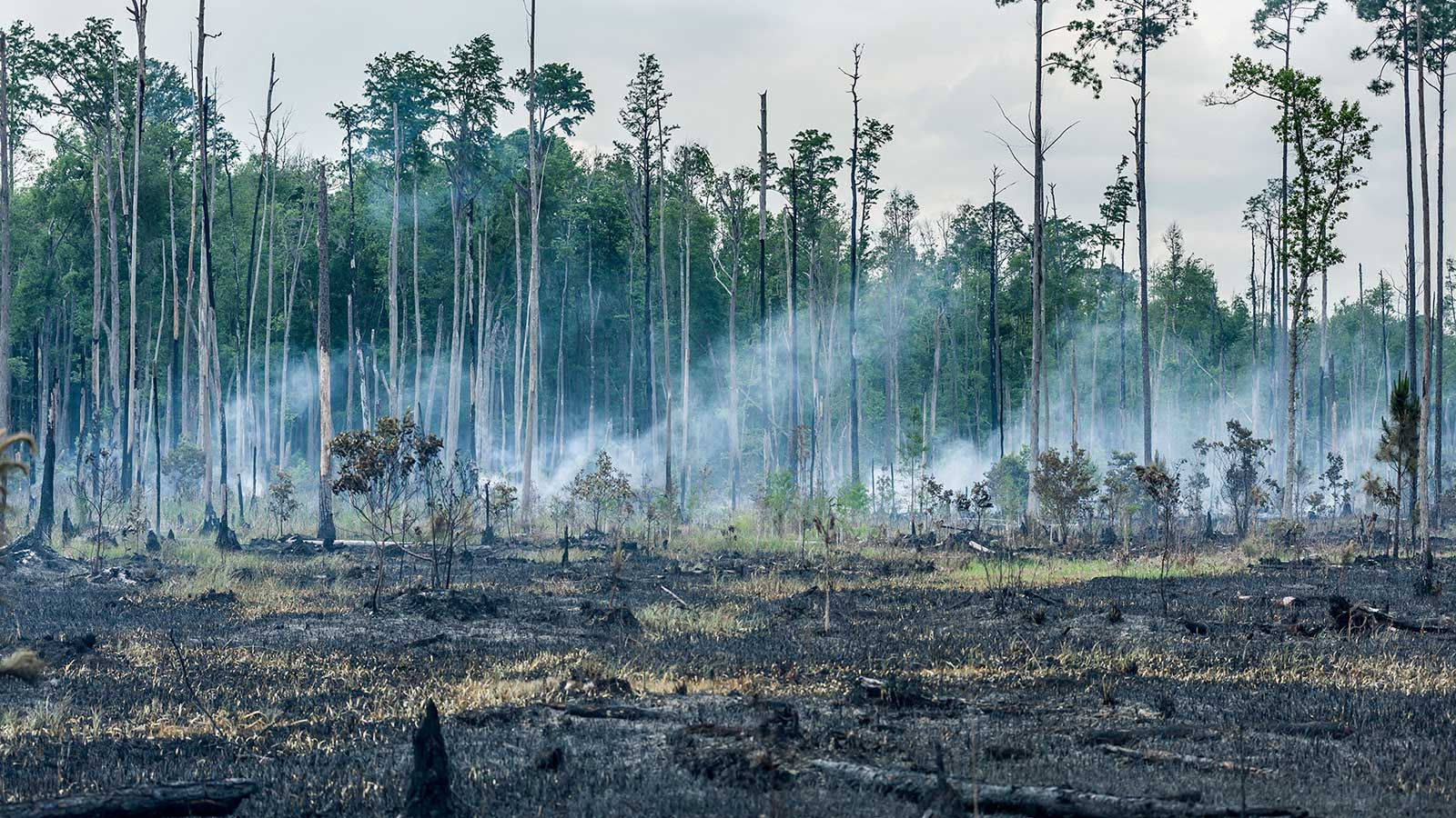 Smoke from a dying fire rolls over the swamp