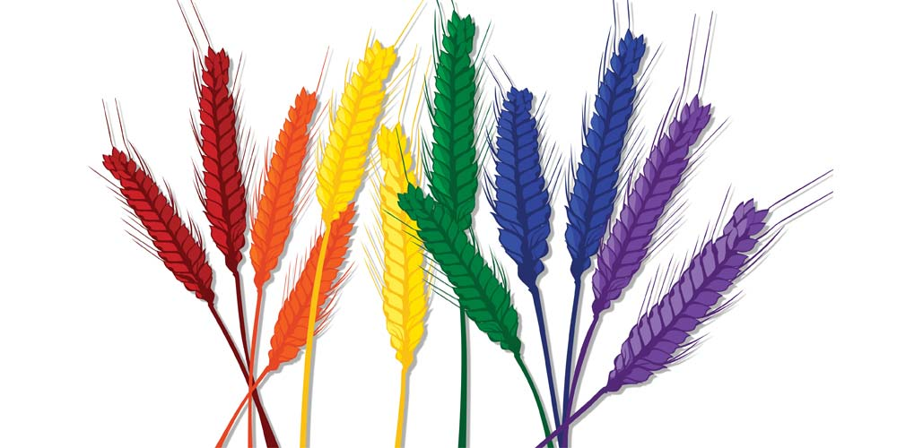 A graphic of rainbow colored wheat