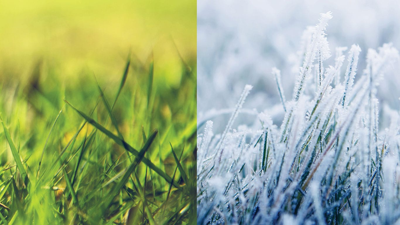 Green grass and snowy grass