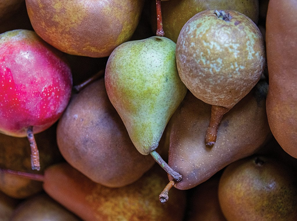Perry pears photo