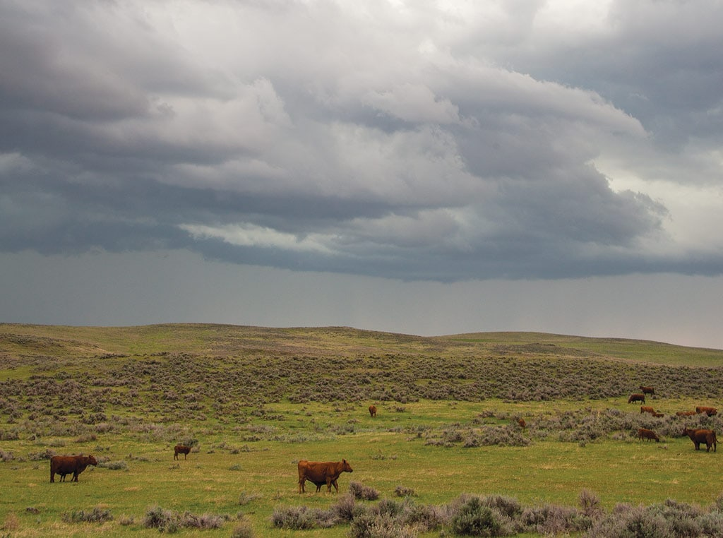 cloudy photo of landscape with cows