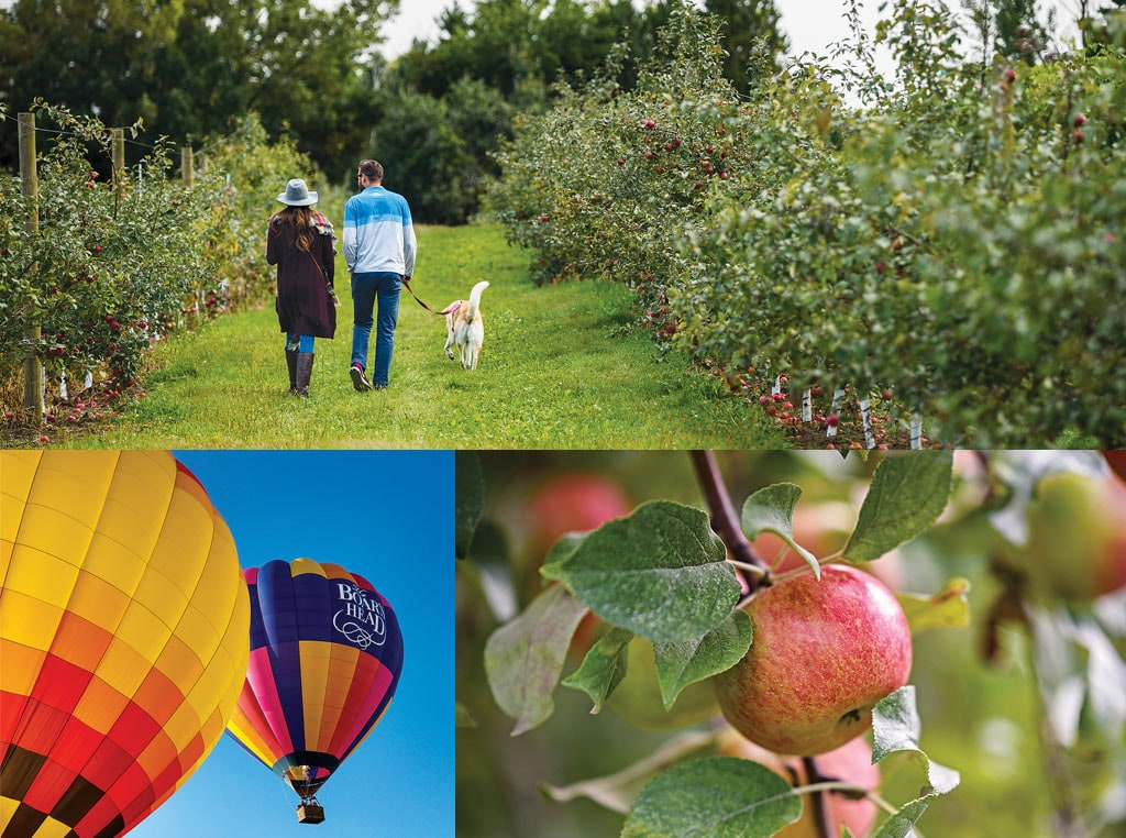 Balloons, apples, apple orchard and people walking dog