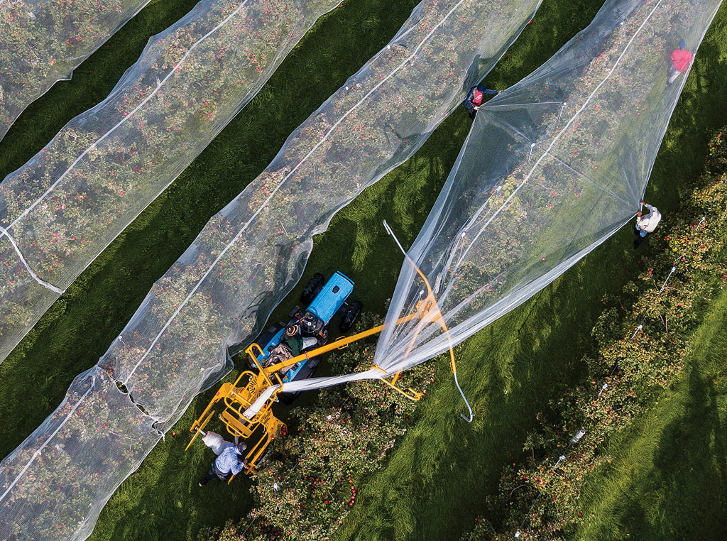 netting over crop
