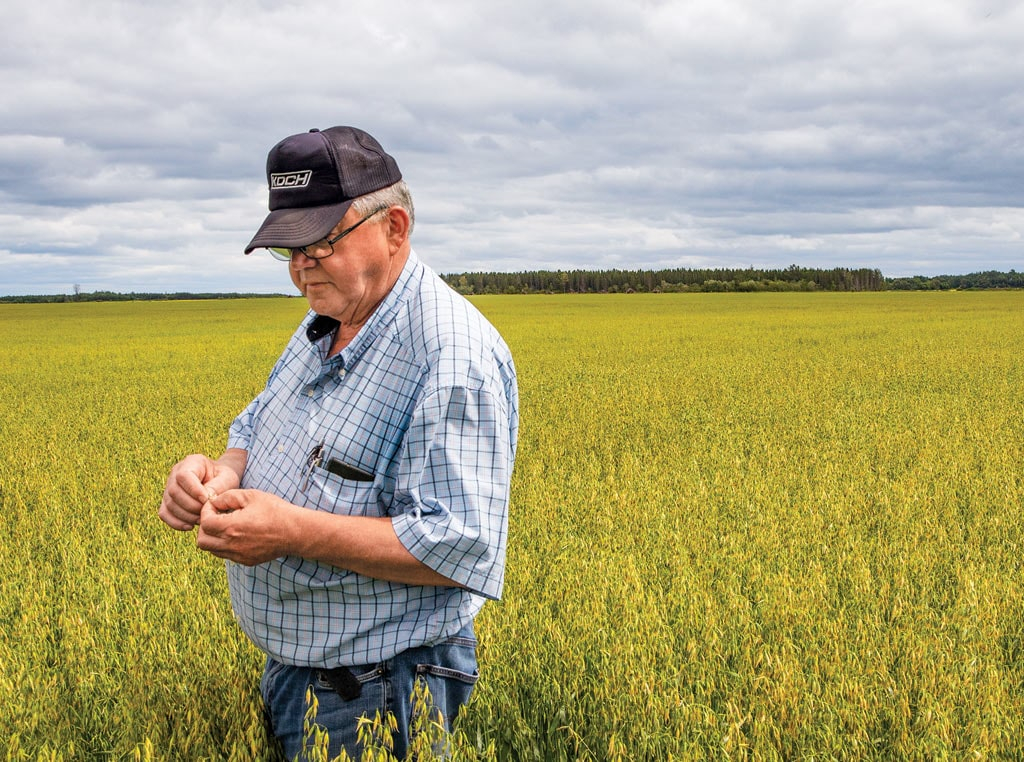koch standing in oat field