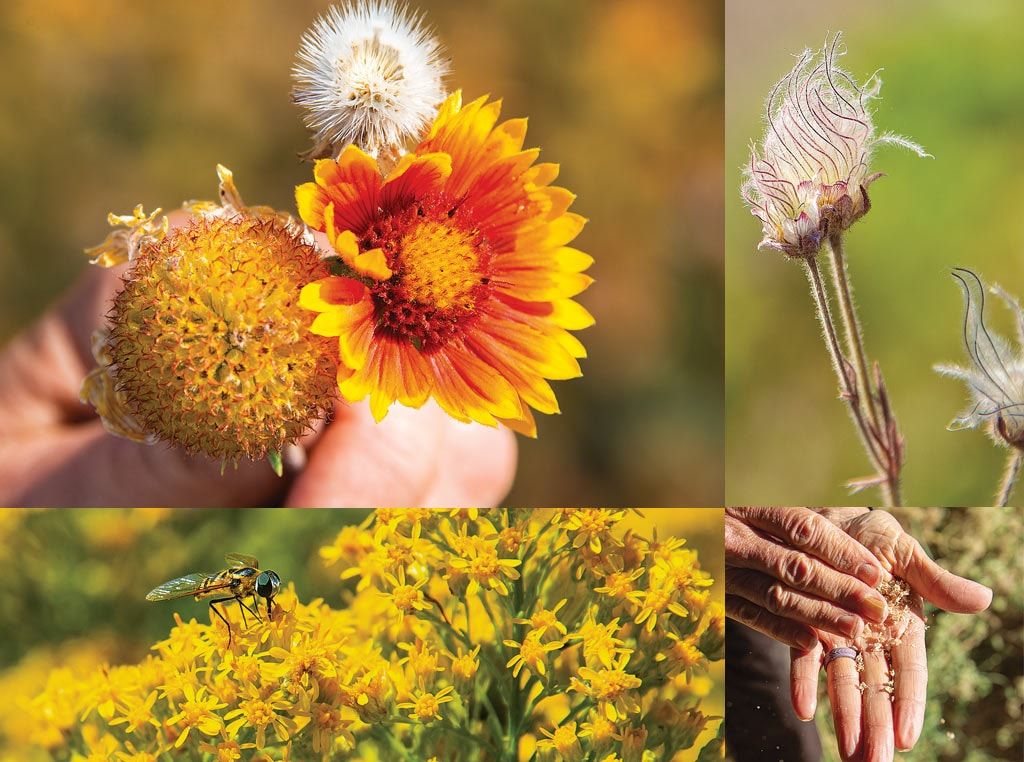 various flowers of the prairie and hands