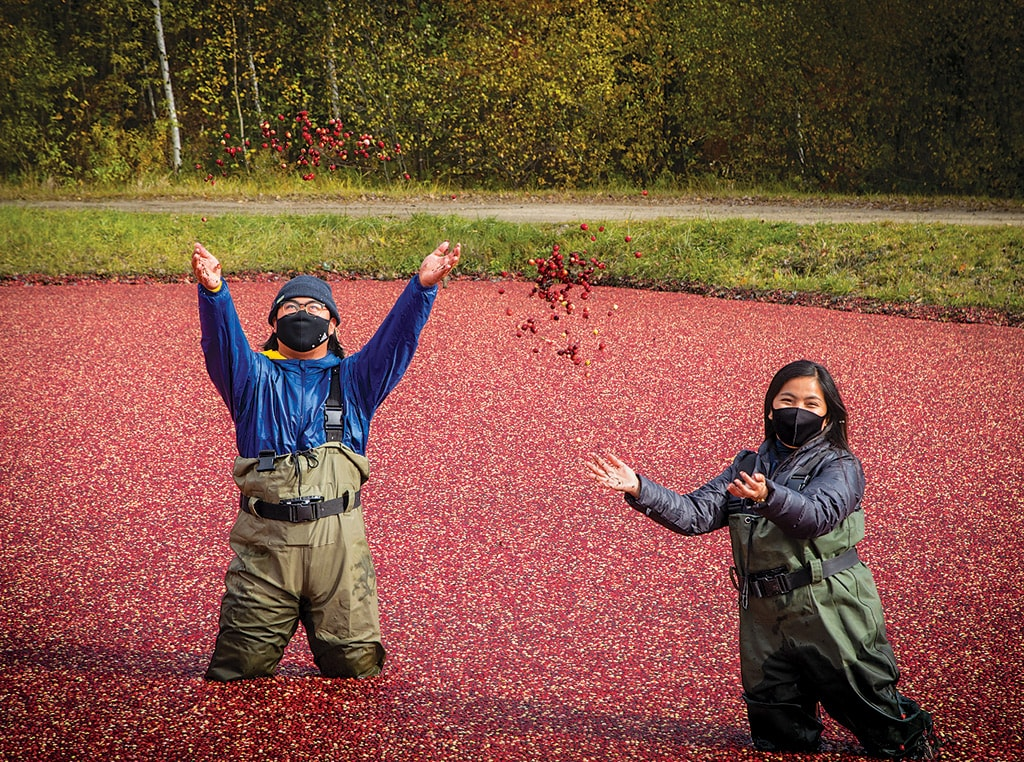 Couple in cranberry harvest